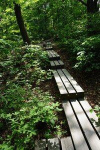 安養公共藝術計畫01_《Forest Road》1