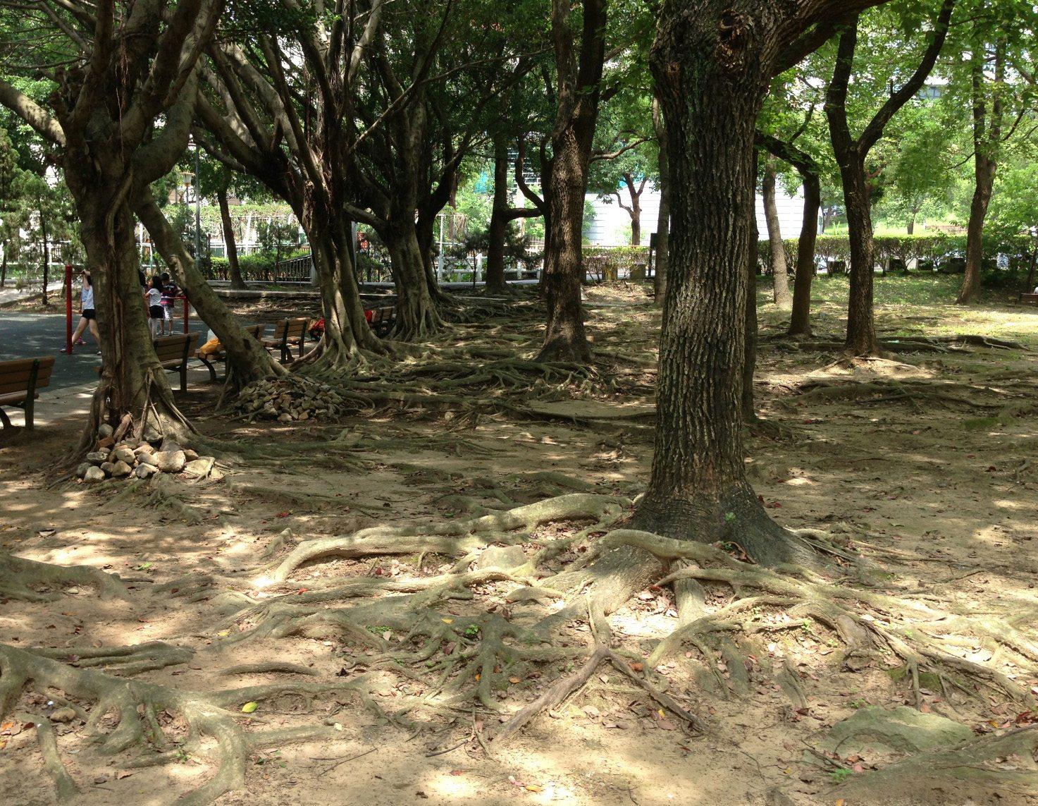 我們的公園 Park I 臺灣公園現況15