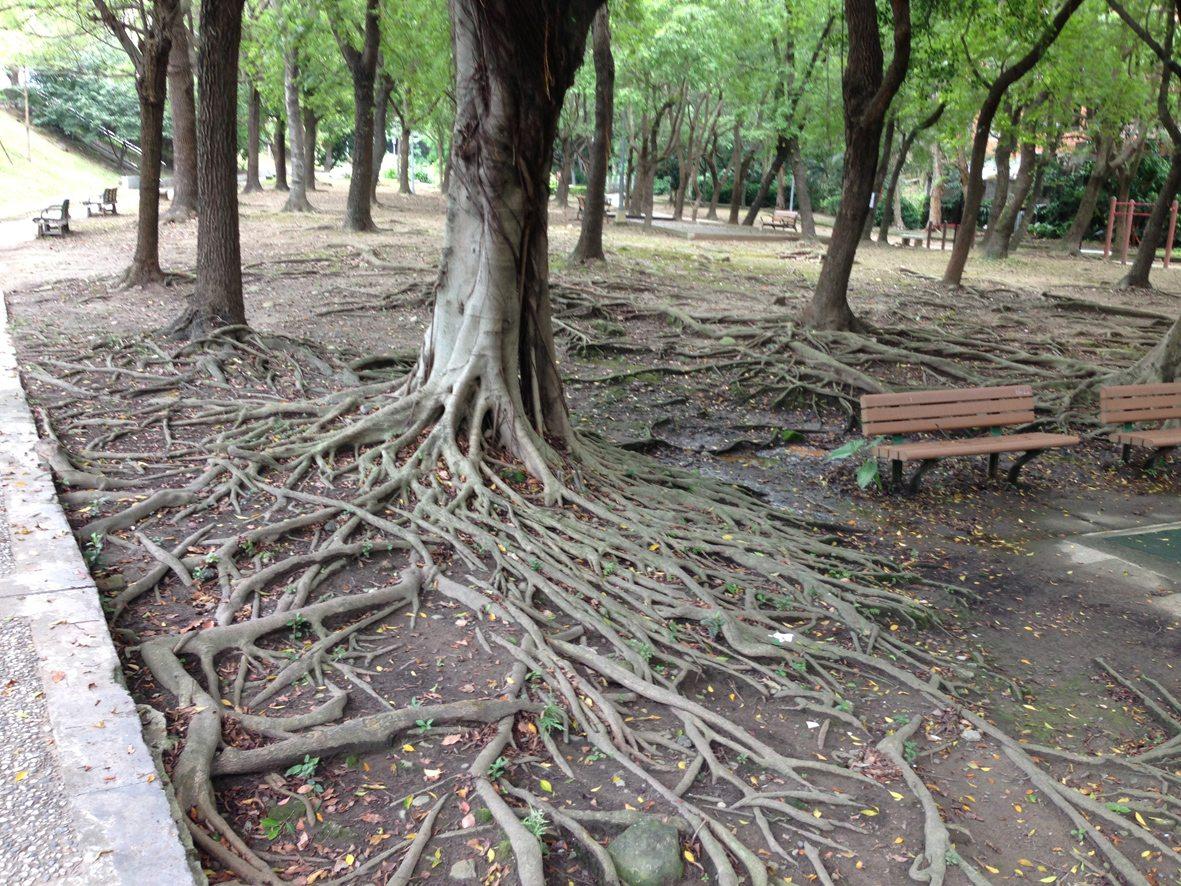 我們的公園 Park I 臺灣公園現況16