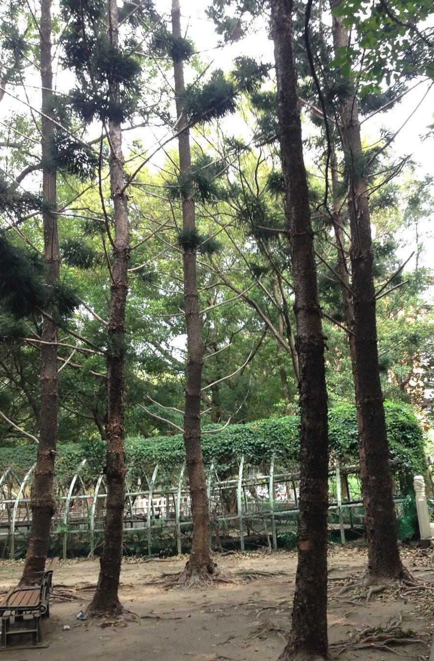 我們的公園Park II :永續生態公園的願景14
