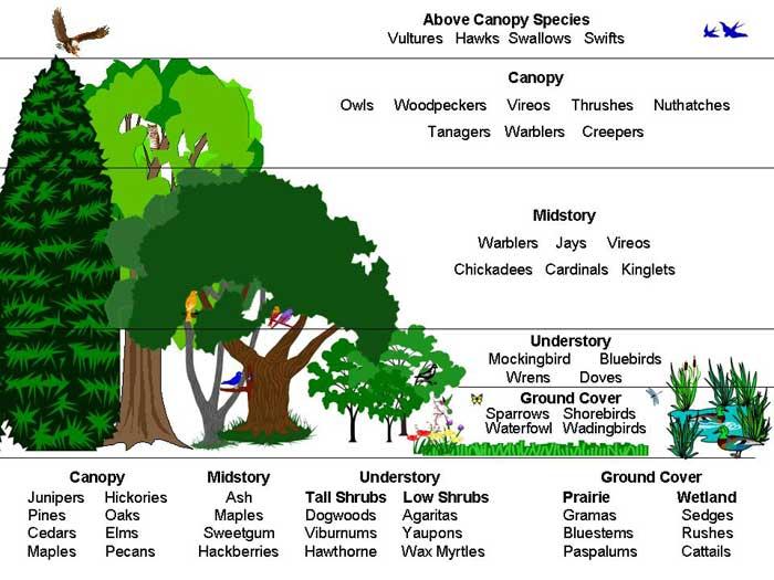 我們的公園Park II :永續生態公園的願景21