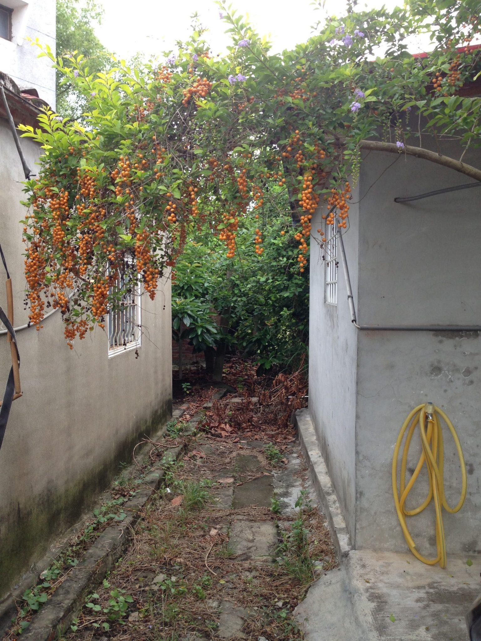我住在山村大崎09